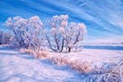 آب و هوای سرد و قطبی