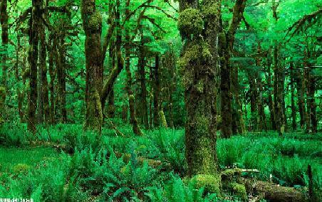 دانلود تحقیق جنگل